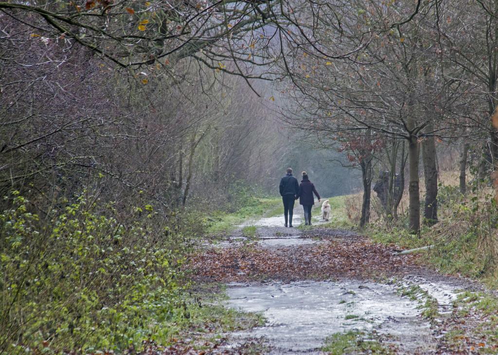Winter Walkies by shepherdman