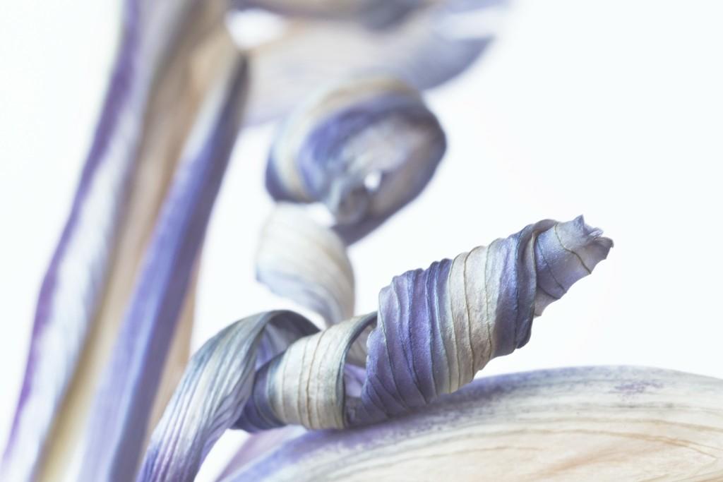 Floral V by dulciknit