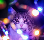 16th Dec 2017 - bokeh cat