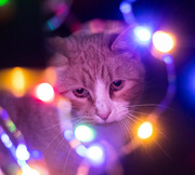 17th Dec 2017 - bokeh oscar