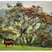 Pohutukawa...  Iconic New Zealand Christmas Tree... by julzmaioro