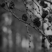 18th Dec 2017 - Woods Of Larch