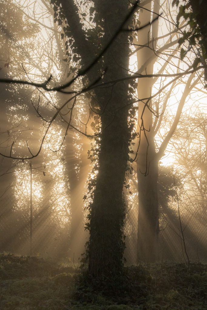 Morning mist by shepherdman