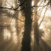 Morning mist by shepherdman