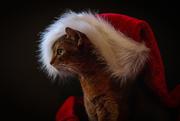 18th Dec 2017 - Santa's Helper