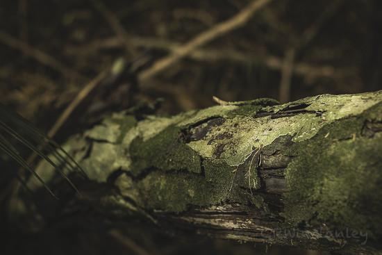 Day 351 Rotting Log by kipper1951