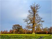 19th Dec 2017 - Dead Tree