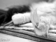 19th Dec 2017 - Fuzzy feet