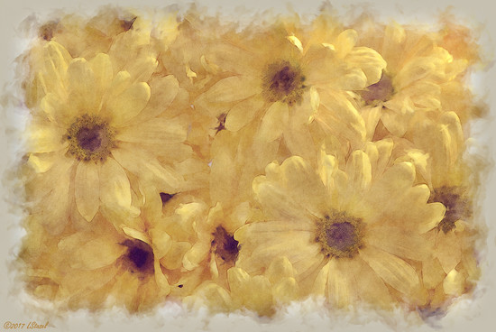 Winter Daisies by lstasel