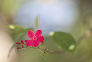 19th Dec 2017 - Flora Costa Rica