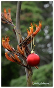 20th Dec 2017 - Christmas Bauble in the Flax Bush...