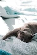 20th Dec 2017 - It's a cat's life