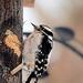 What ya doin woodpecker?? by fayefaye