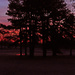 Sunrise Peeking on the Pond by milaniet