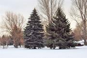 21st Dec 2017 - Light Snow Day