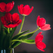 Tulips from my Mom by kwind