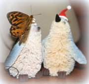 22nd Dec 2017 - Santa didn't visit - but a butterfly did!!