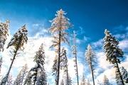 22nd Dec 2017 - Forest Sentinels