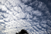 20th Dec 2017 - Interesting Clouds