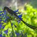 Unknown bird...... by ludwigsdiana