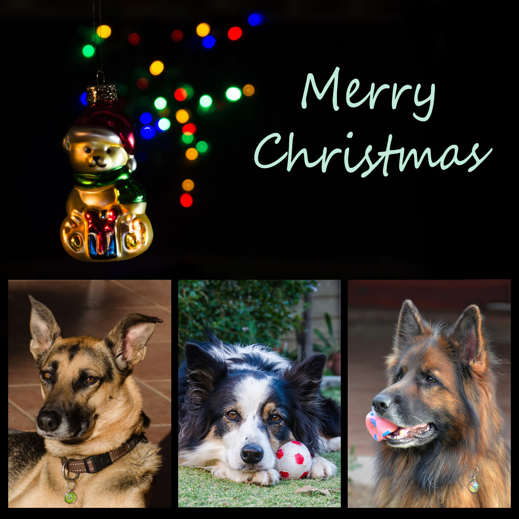 Christmas Card by salza