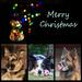 Christmas Card by salza