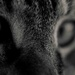 Cat Eyes by dianen