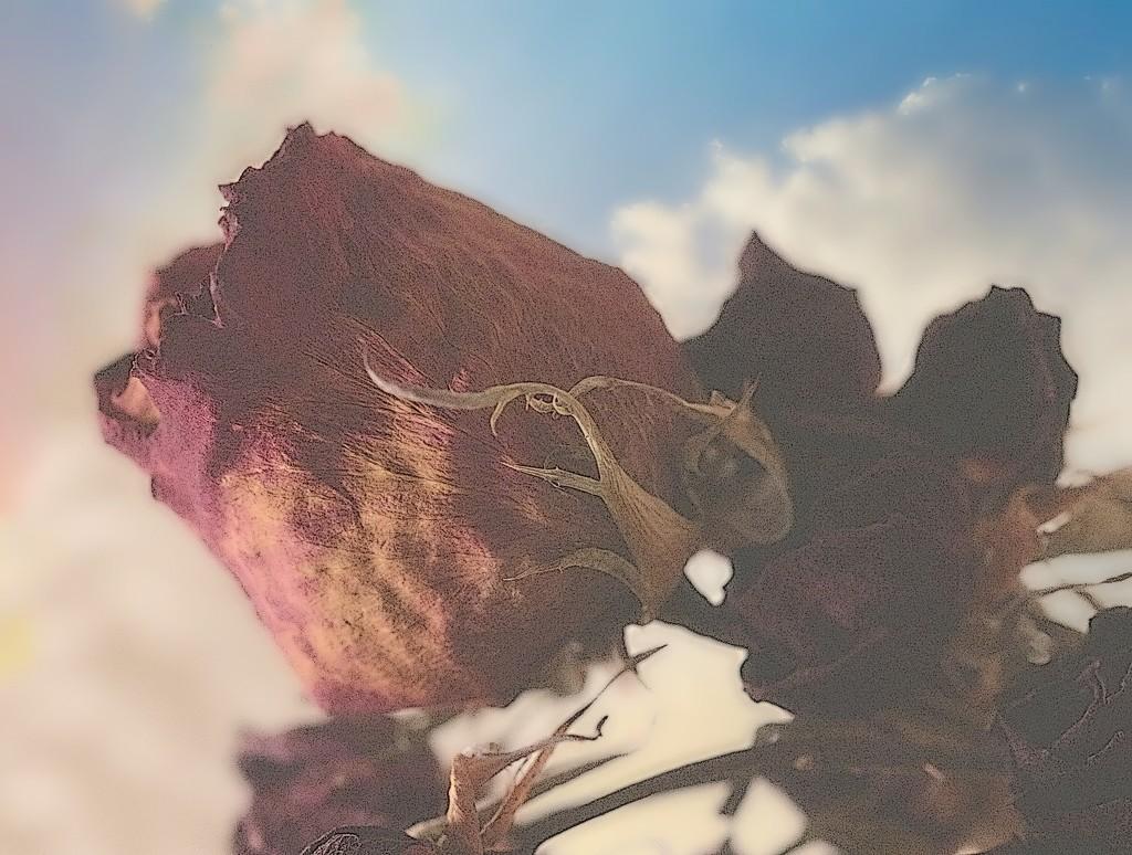 Fall of Roses by juliedduncan