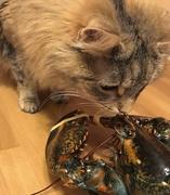 23rd Dec 2017 - Day 98:  Cat Meets Lobster