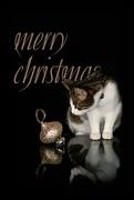 24th Dec 2017 - 2017-12-23 Merry Christmas