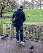 18th Dec 2017 - Feeding the pigeons