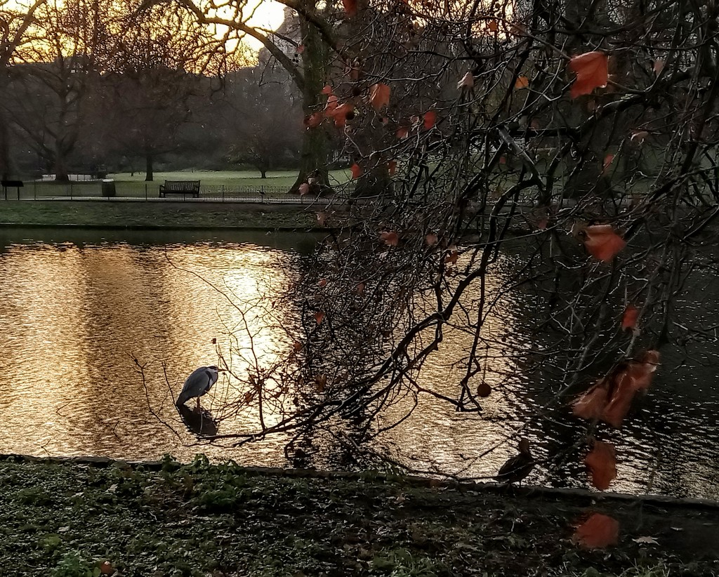 Heron on the lake by boxplayer