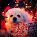 Merry Christmas by chloette