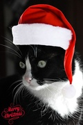 24th Dec 2017 - Waiting for Santa.
