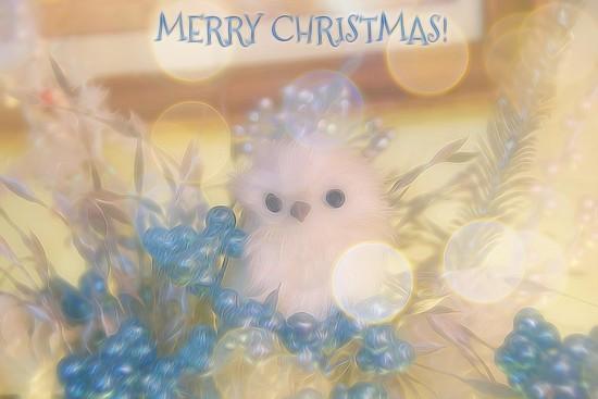 MERRY CHRISTMAS! by joysfocus
