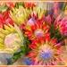 Proteas.... by ludwigsdiana