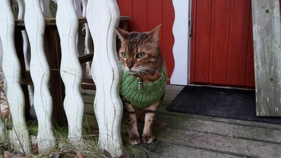 Sweater weather by katriak