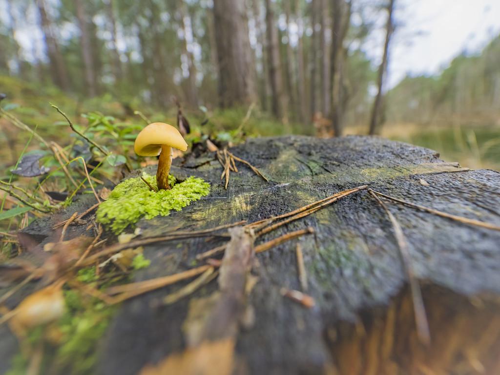 The stump by haskar