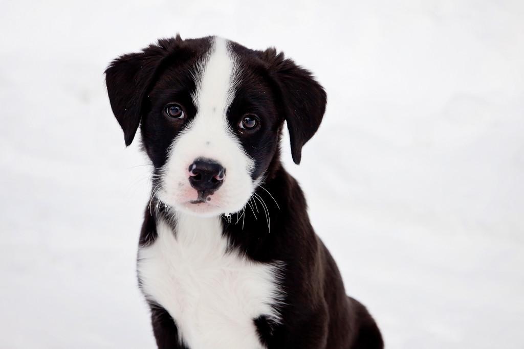 Puppy cuteness by kiwichick