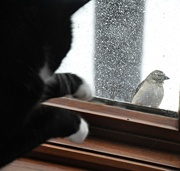 """25th Dec 2017 - """"No finch, you can't come in my house."""""""