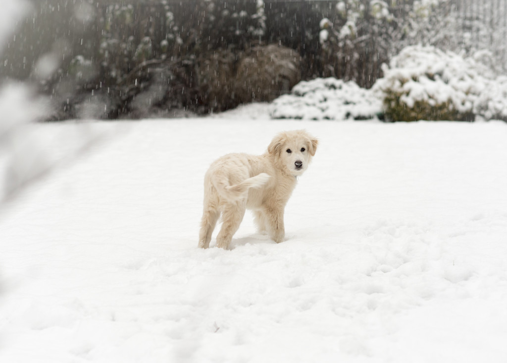 Puppy's First Snow by epcello