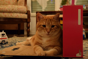 25th Dec 2017 - Christmas cat