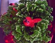 26th Dec 2017 - Christmas plant