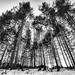 12.25 La nature est un temple... by domenicododaro