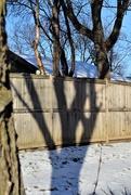 27th Dec 2017 - Tree Shadow