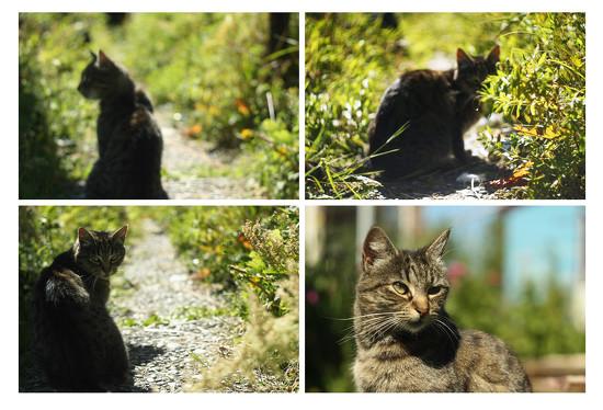 helios cat by kali66