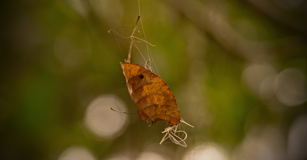 Dangling Leaf! by rickster549