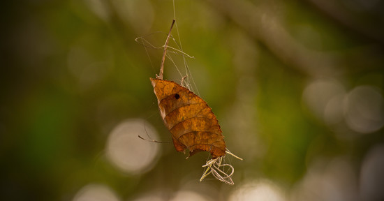 Dangling Leaf! by rickster549