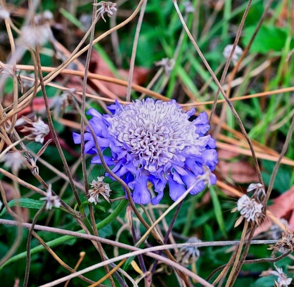 Hidden in the Weeds by joysfocus