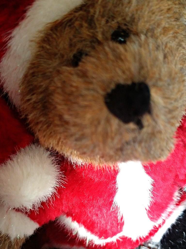 Santa Bear  by jo38